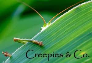 Creepies and Co